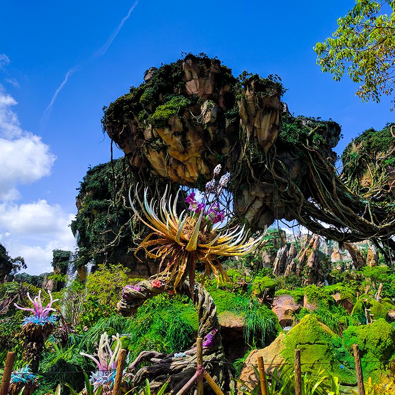 Photo du monde d'Avatar à Disney Orlando avec couleurs optimisées pour les réseaux sociaux
